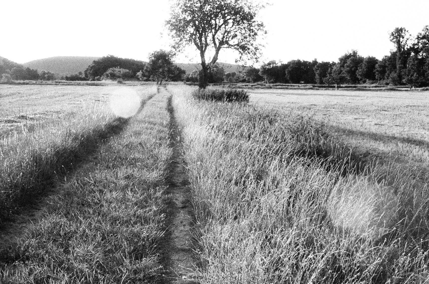 10_ParisProvence_field