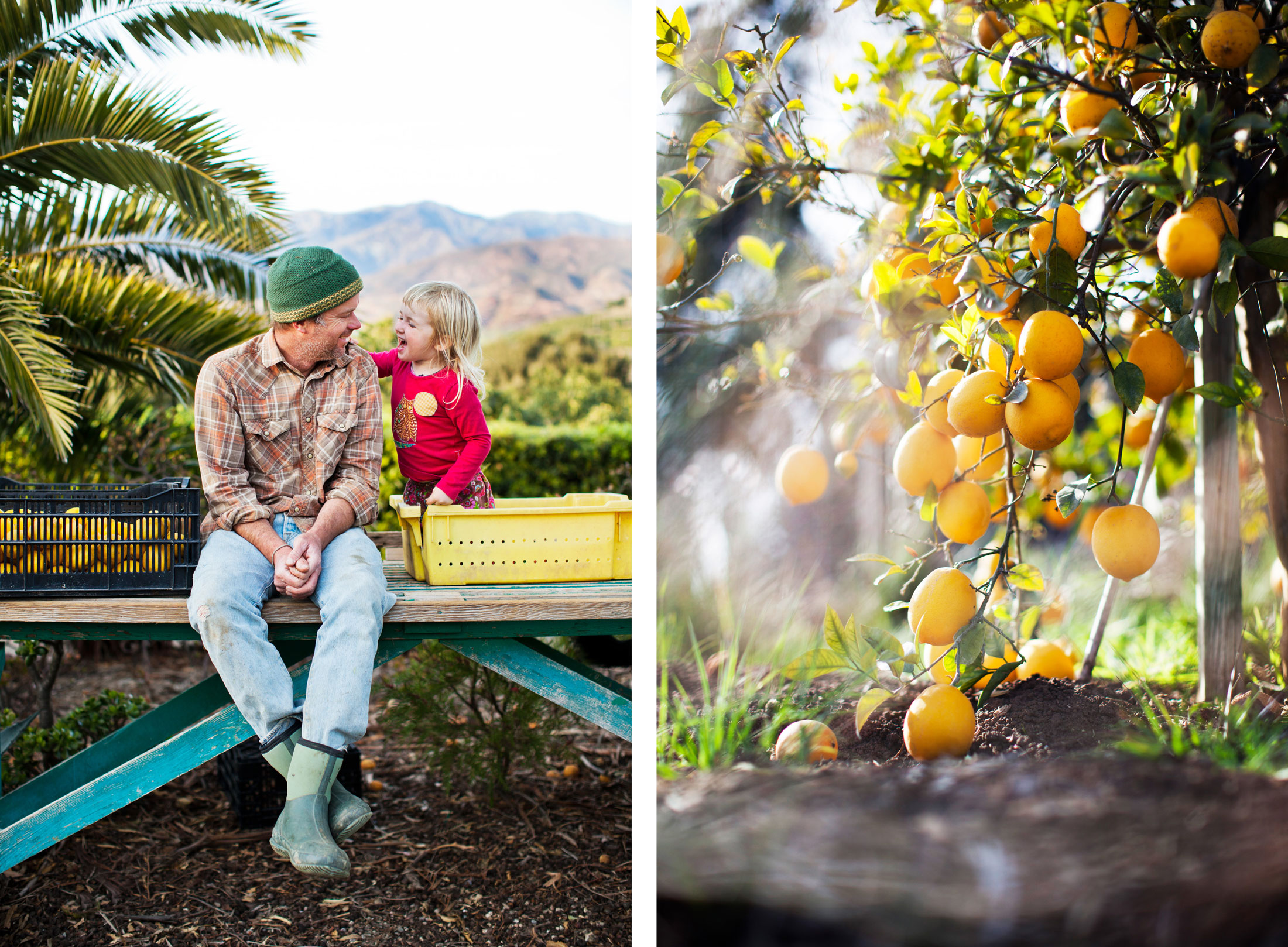 14b_Remington_HilltopFarmMeyerLemons_MG_0559
