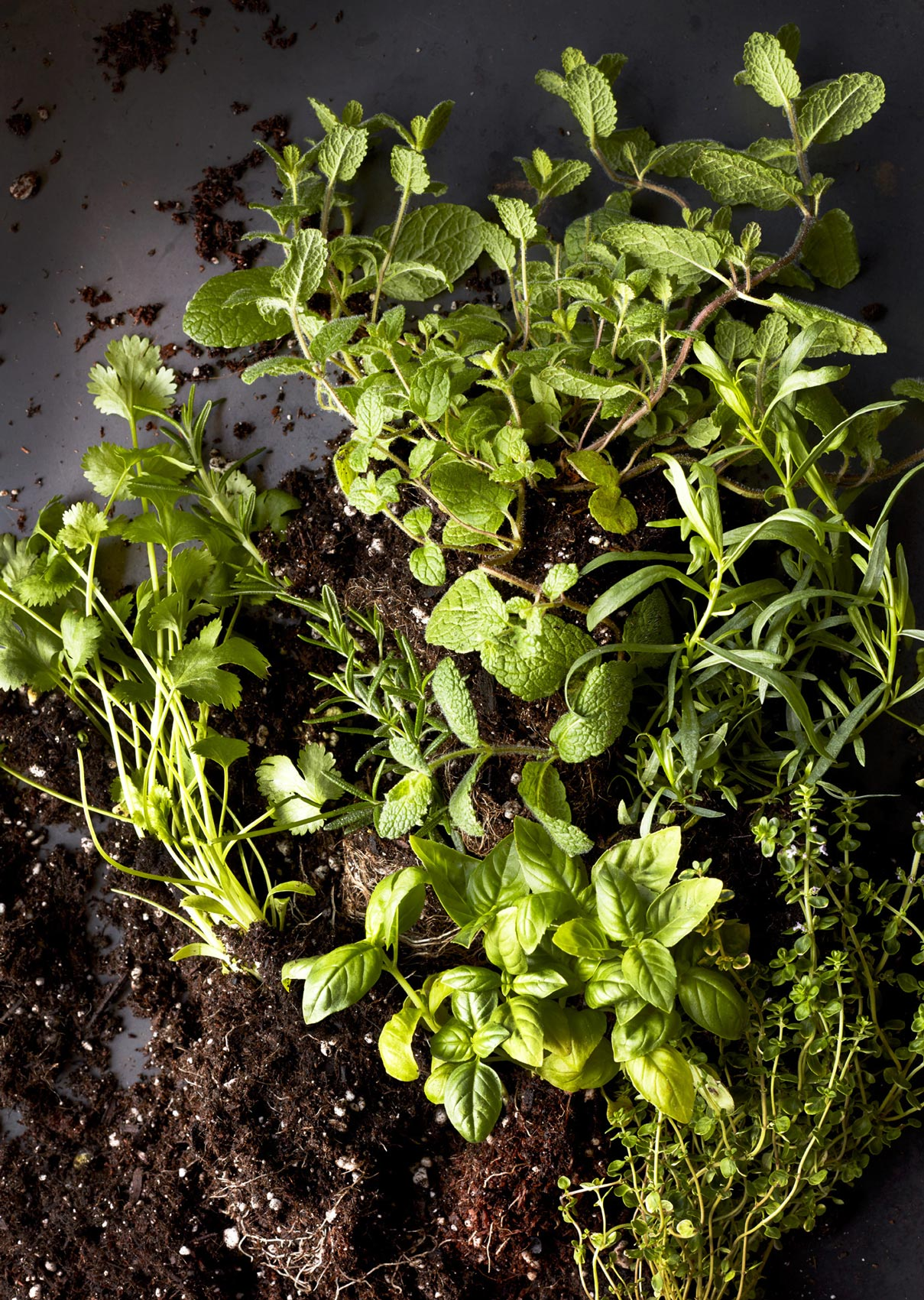 WineInsituteCookbook_Herbs_1165